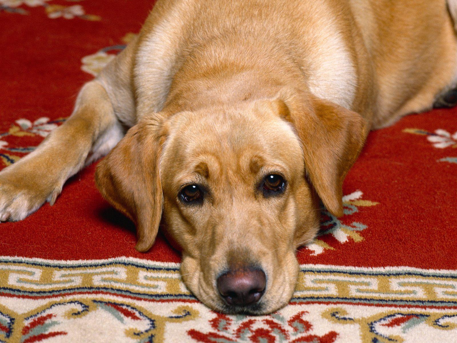 Собачья жизнь картинки