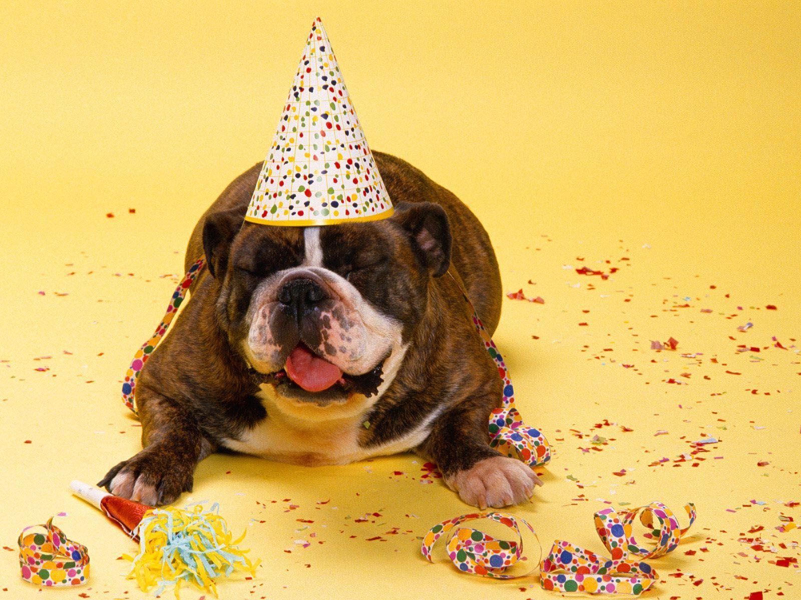 Открытки с днем рождения с собачками фото