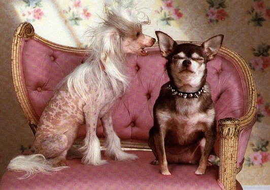 Две собачьи кумушки сидят на кушетку и