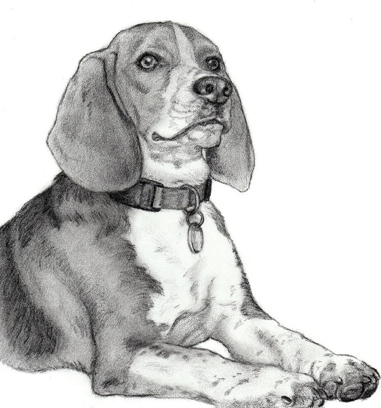 рисунки собак: