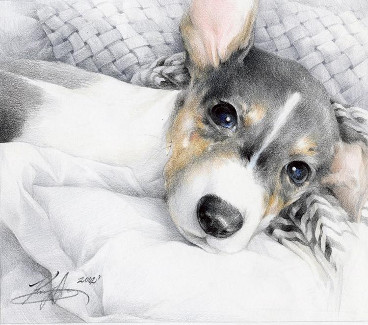 Картинки собачий нос