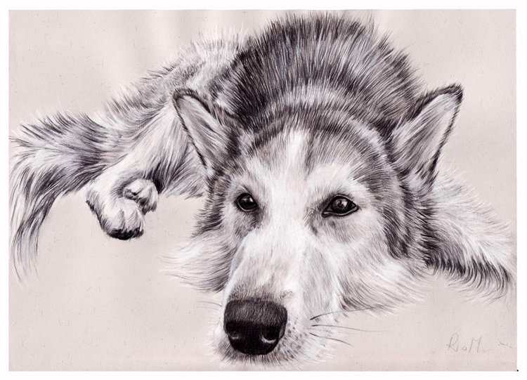 Рисунки щенков и собак