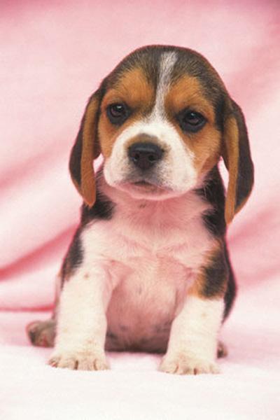 Собачья Жизнь - Собачья Жизнь