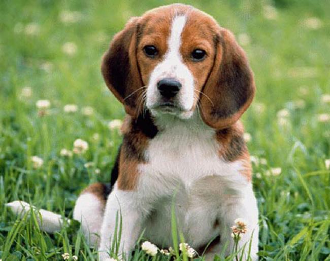 скачать бесплатно породы собак - фото 3