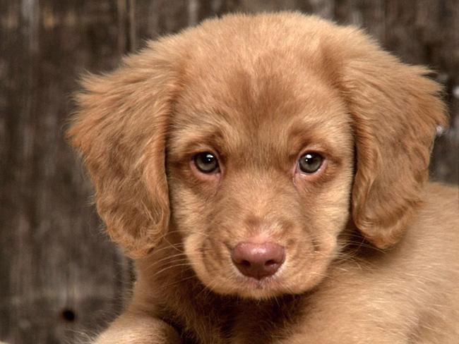 фото собак высокого разрешения