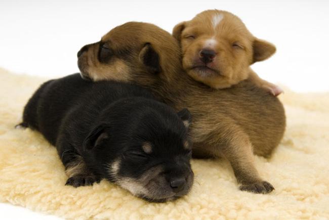 Фотки щенков