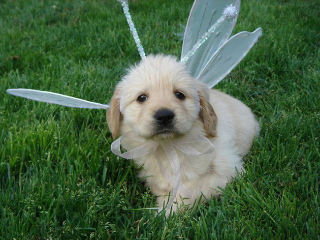 Белоснежный щенок