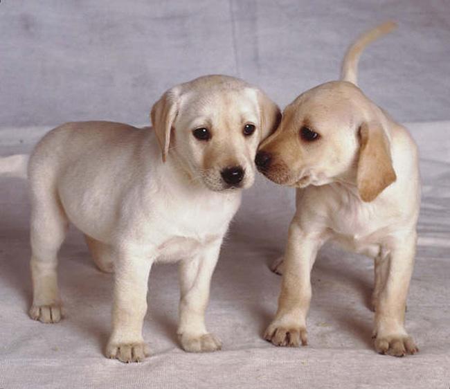 скачать картинки про щенков и котят