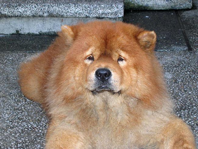 Породы собак (фото с названиями): выбираем друга по